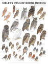 Sibley's Owls of North America Wall Poster